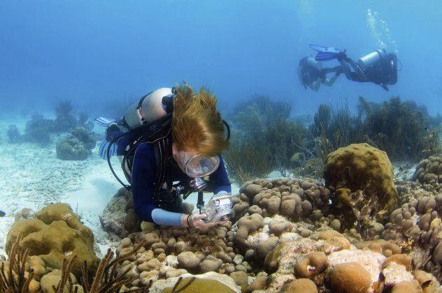 Para Ver o Mundo   Bonaire: Imagens Deste Paraíso Que Também É Sinônimo De Tranquilidade