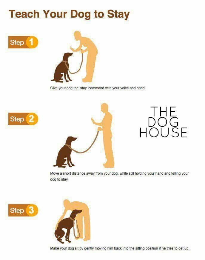 Teaching Your Dog To Stay Trick Dog Training Dog Training