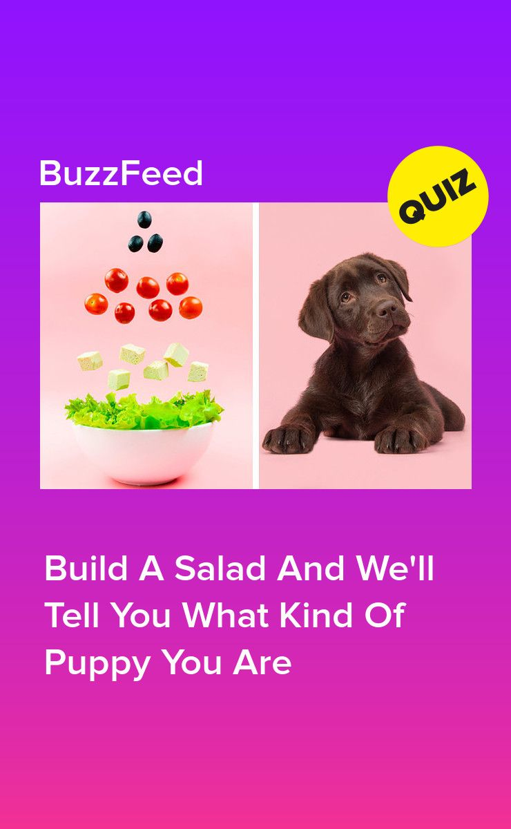 Build A Salad And Find Out Which Puppy You Are Dog Food Recipes