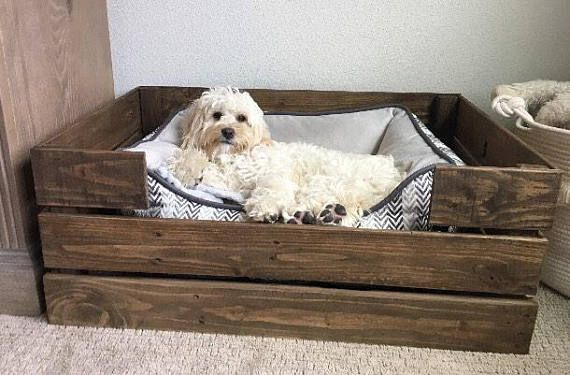 Make Your Beloved Pet Feel Comfy And Cozy At Home With Their