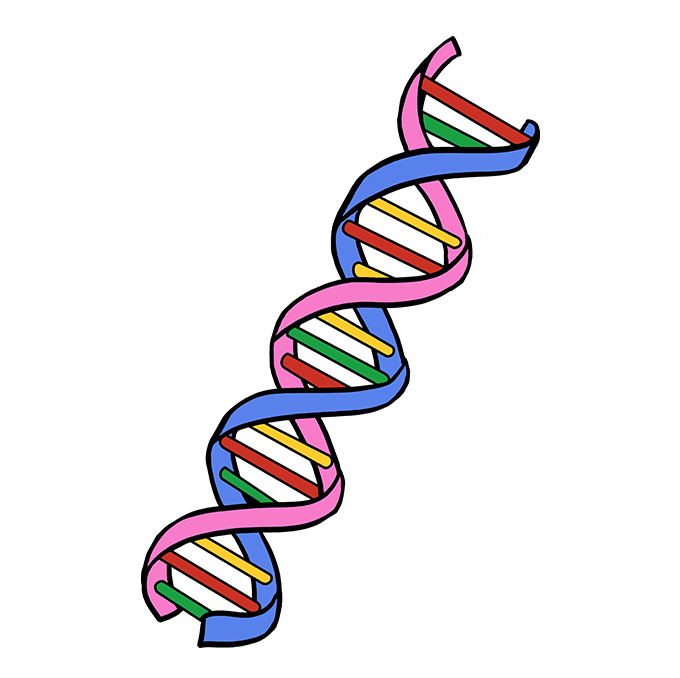 How To Draw Dna Really Easy Drawing Tutorial Dna Drawing Drawing Tutorial Easy Easy Drawings