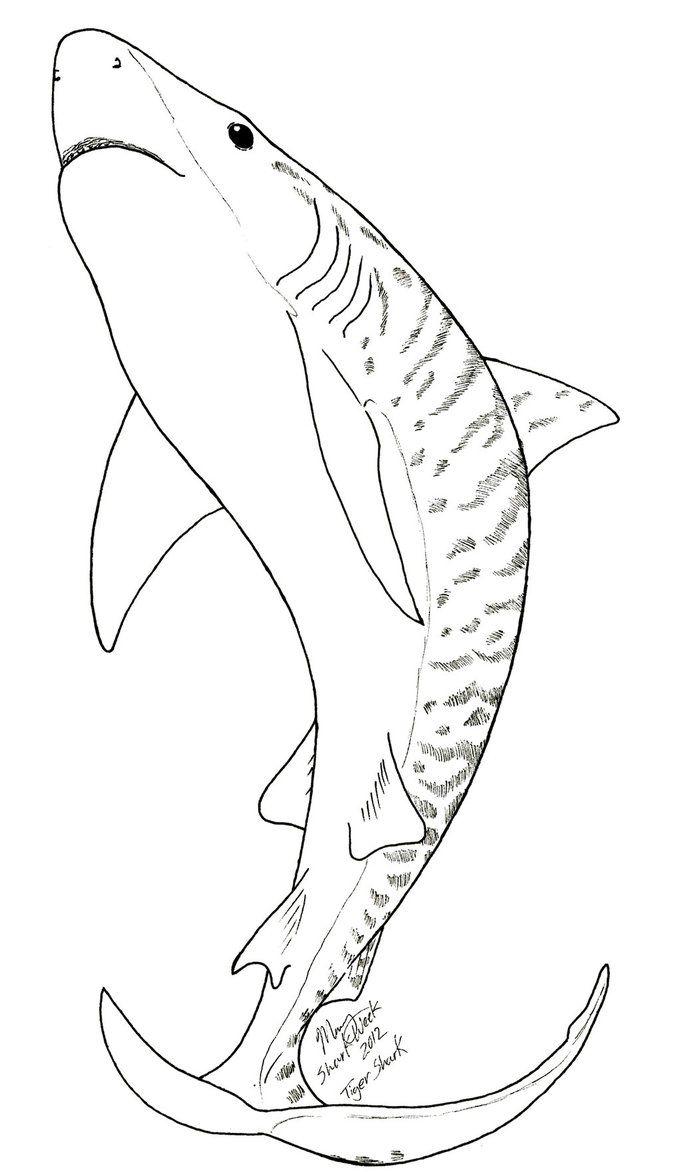 Tiger Shark Coloring Page  Shark coloring pages, Shark drawing