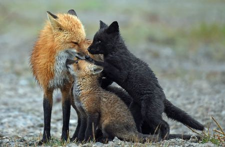 Adoration, Communications, Tenderness Photo by Derek Grant — National Geographic Your Shot