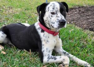 Meet Pongo! Pongo is believed to be a mix of perhaps