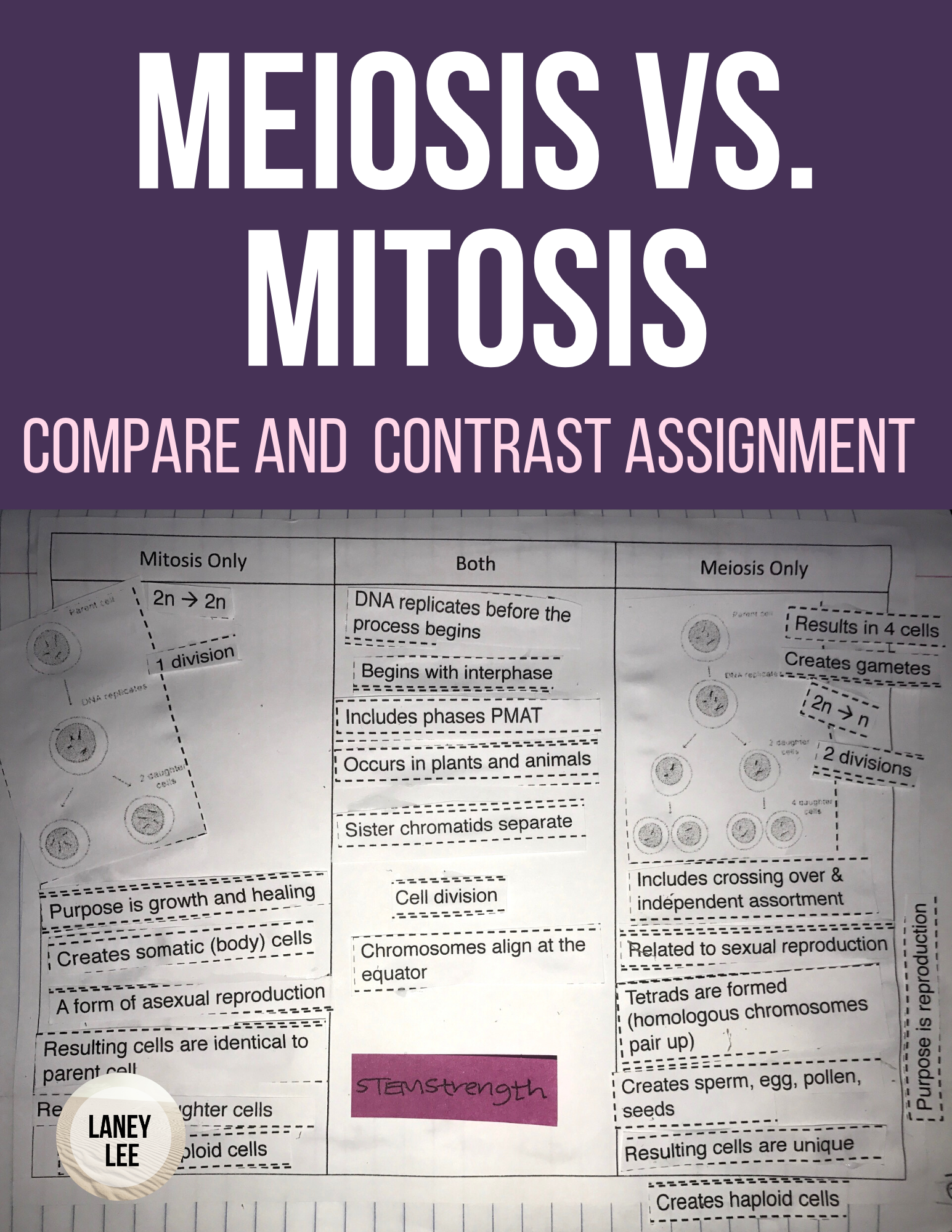 Meiosis Vs Mitosis Compare And Contrast