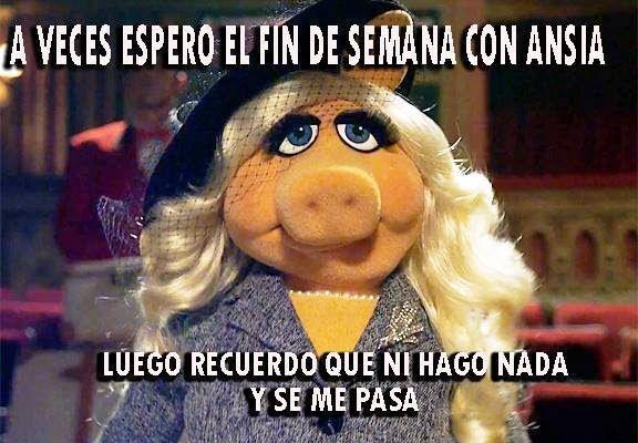 Rana Rene Memes Google Search Chistes Y Bromas Memes Sarcasticos Chistesitos