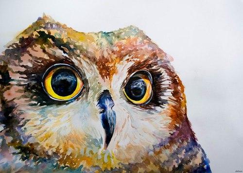 Owl amazing  love owls  art -  Dream,  owl,  #cutie,  nice -  #color
