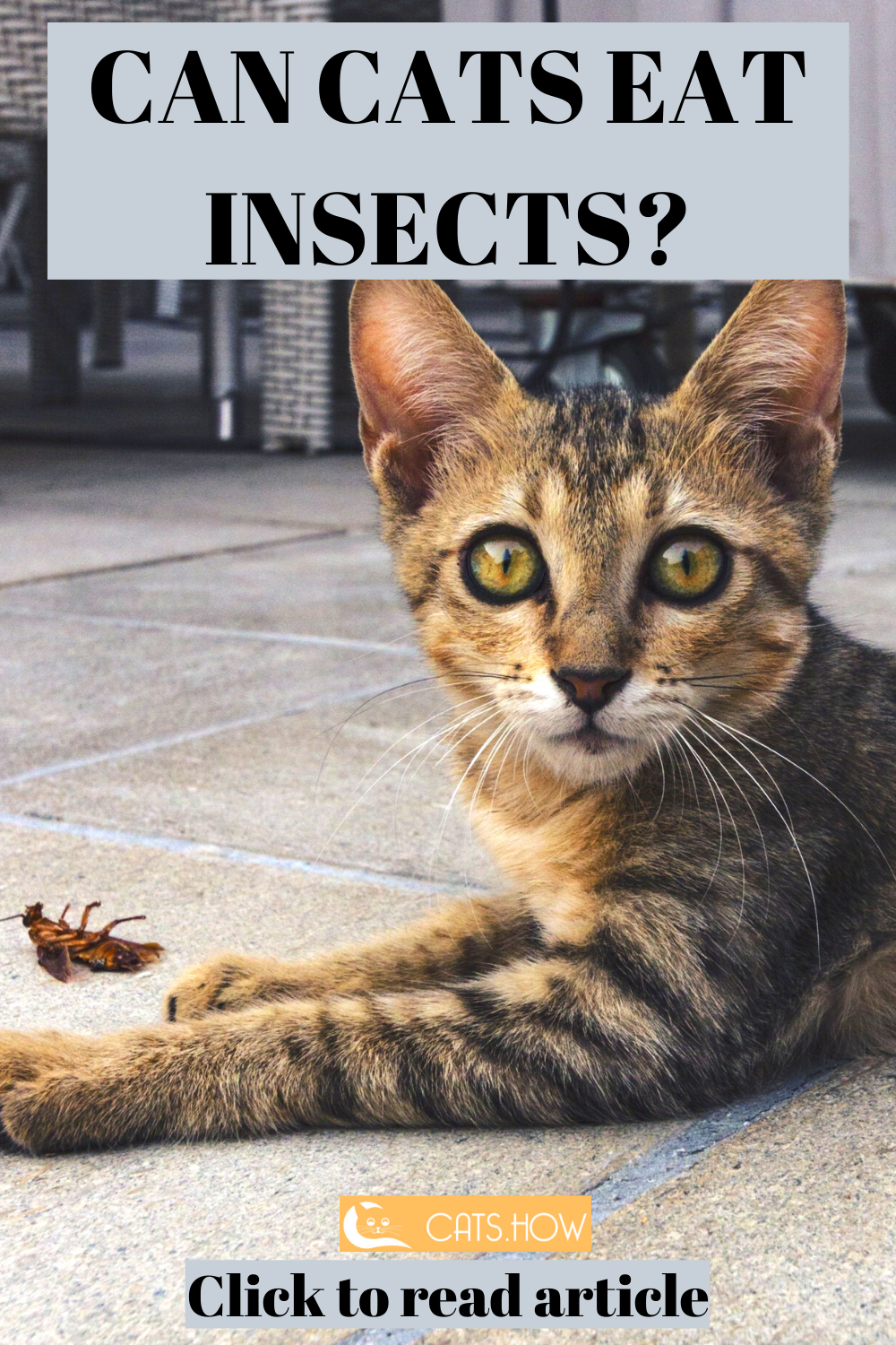 Can Cats Eat Insects Cats Cat Care Tips Cat Facts