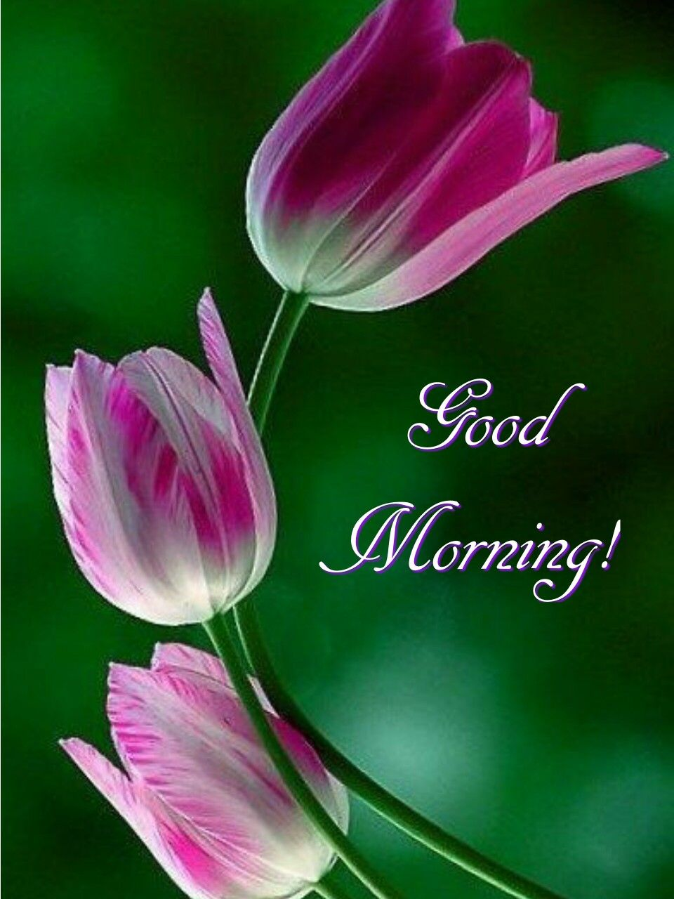 Have a happy and blessed day! Good morning flowers, Good