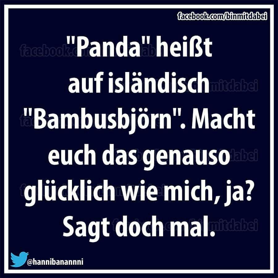 Panda Heisst Auf Islandische Bambusbjorn Humor Funny Humor Und