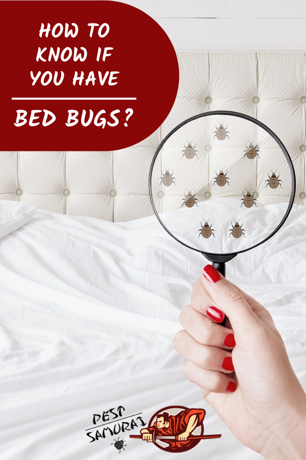 Bed Bug Signs How to Know If You Have Bed Bugs? Bed