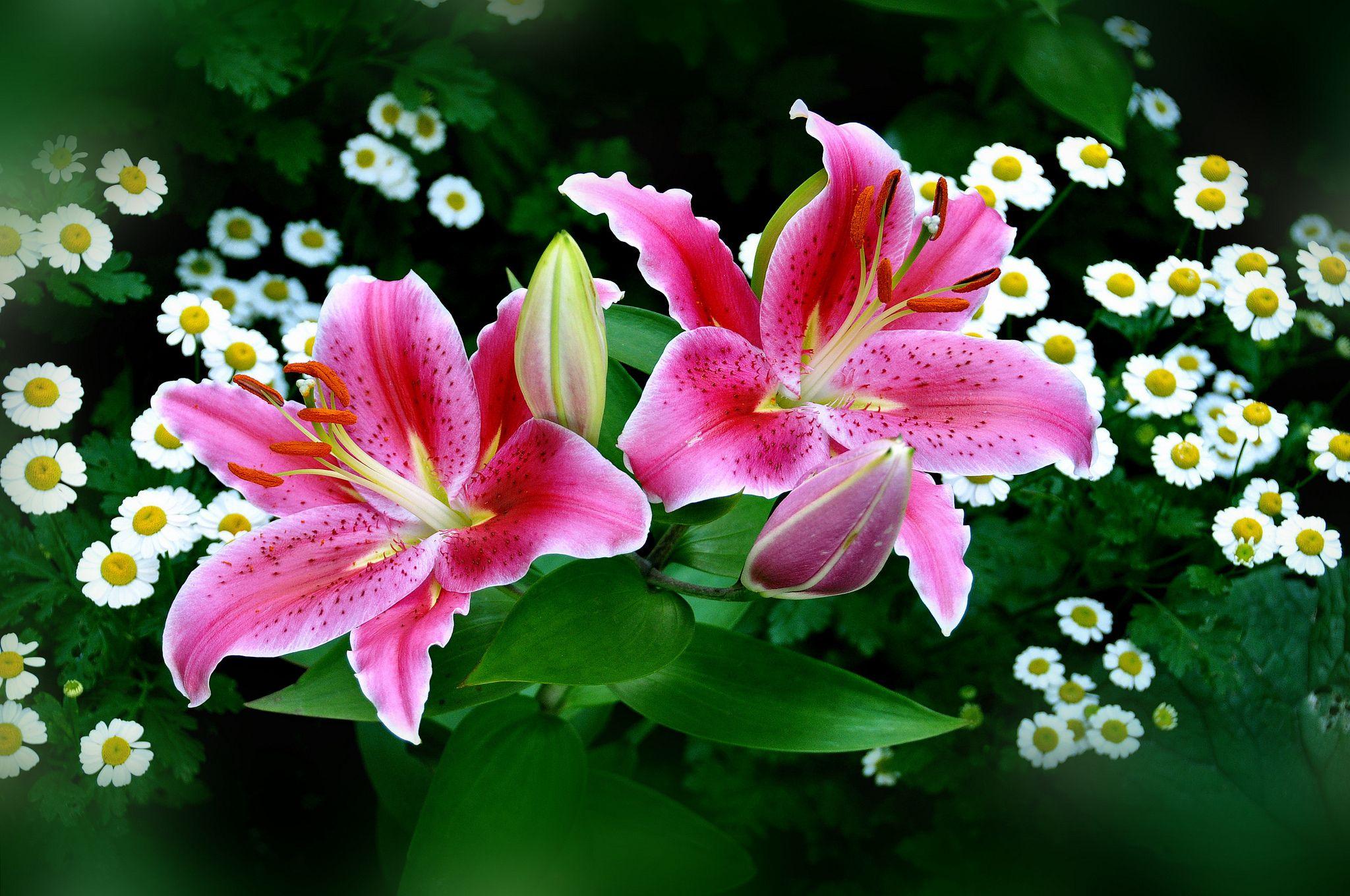 spring-easter-lilies-319660.jpg 2,048×1,360 pixels