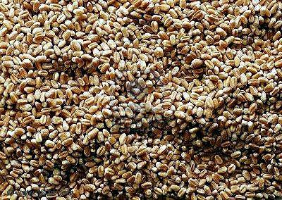 PARTE DE PRENSA A través de la Resolución 360/2015 la Secretaría de Comercio, dependiente del Ministro de Economía Axel Kicillof, establece nuevos requisitos burocráticos y discrecionales para la exportación de trigo, estableciendo listas de comprado