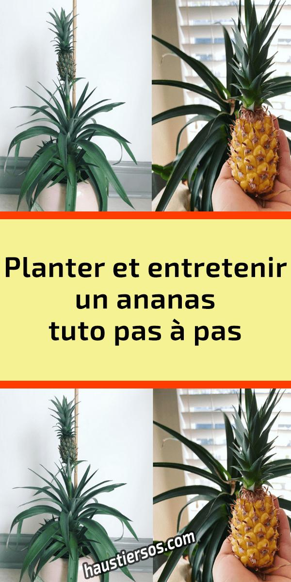 [TUTO] Comment planter un palmier ? - Jardinerie Gamm vert