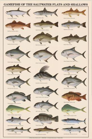 Saltwater Australian Fish Identification Chart