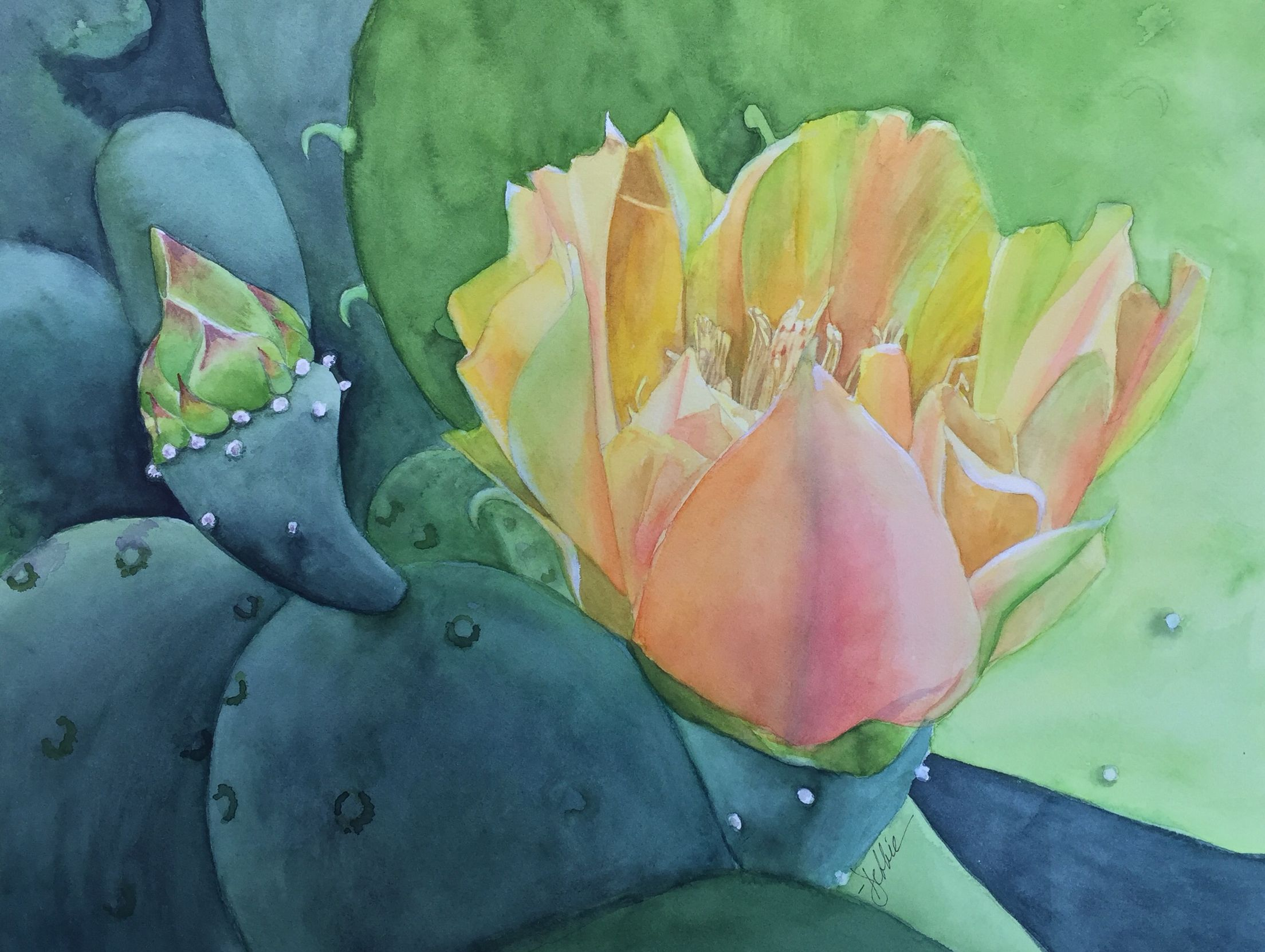 Desert Blush Cactus Watercolor By Debbie Mackall Watercolor
