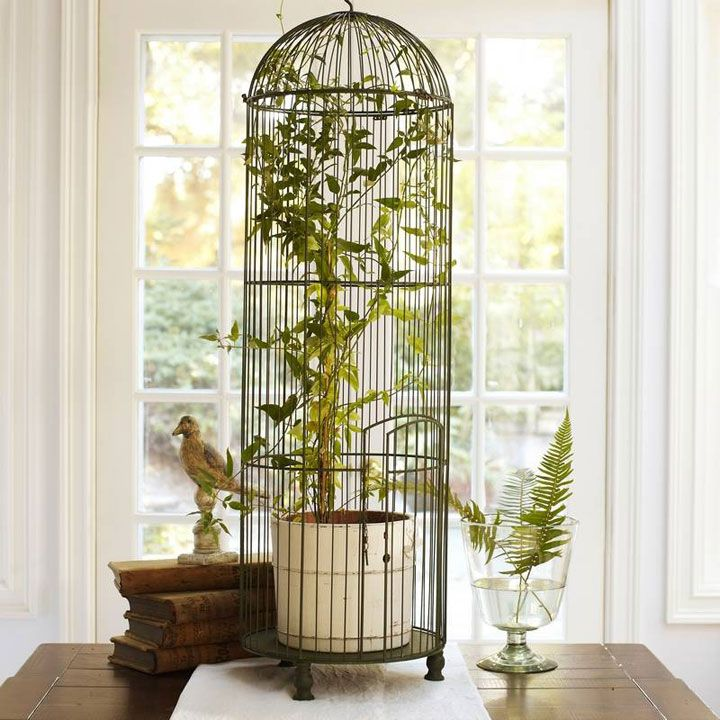 Jaulas decoradas con plantas home decoraci n de jaula for Casas decoradas con plantas naturales