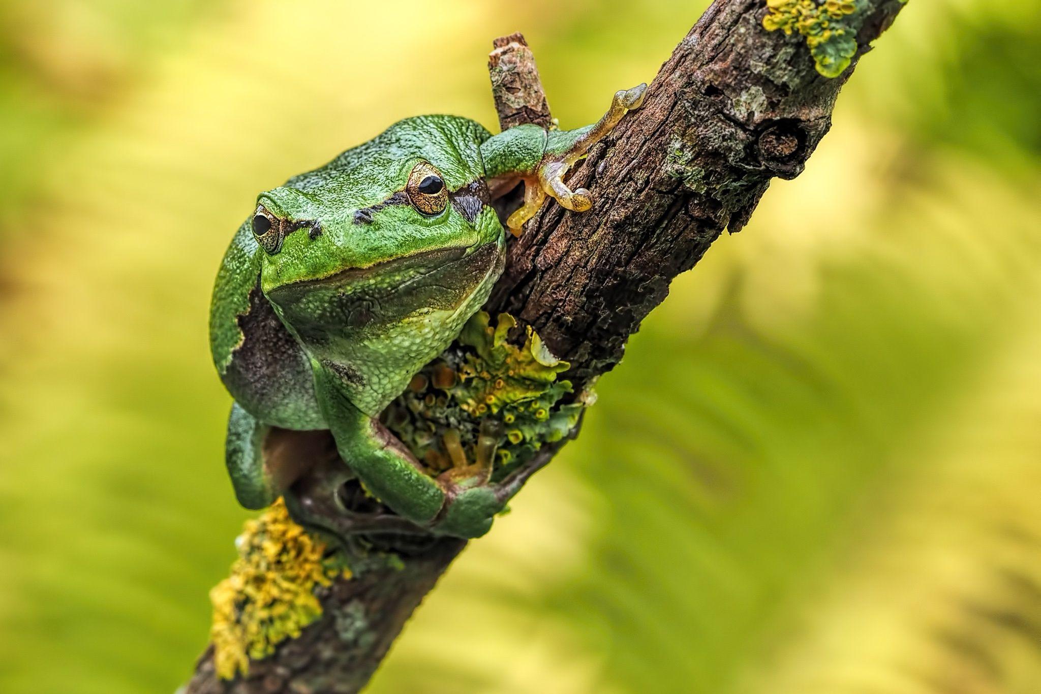 Tree Frog III by Dirk Seifert on 500px