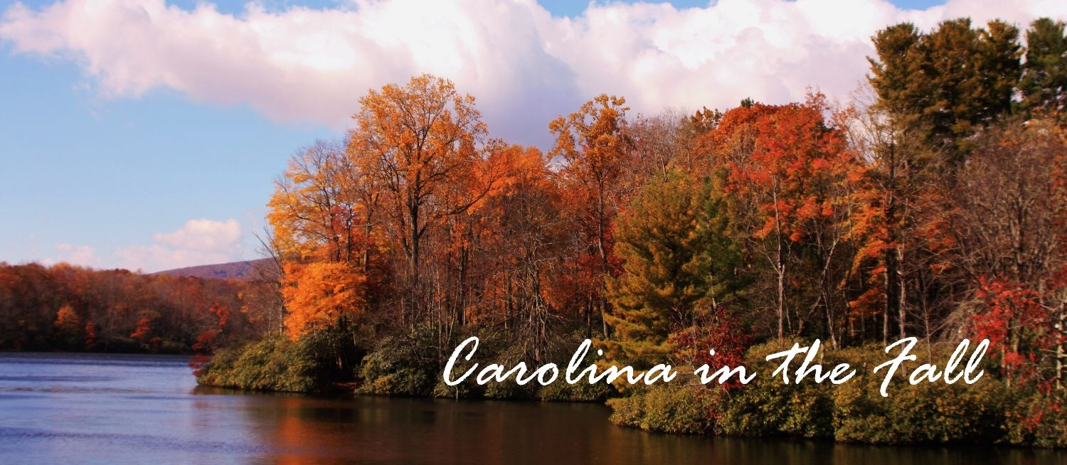 One of the most beautiful times of the year in Carolina!