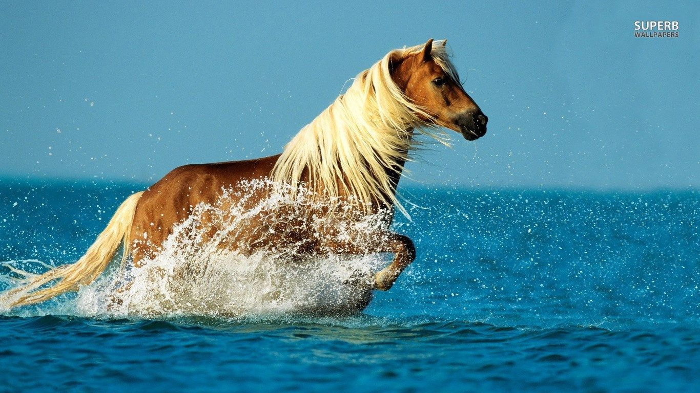 Great Wallpaper Horse Android Phone - d0744210cc636d482894467be81e44d1  2018_967541.jpg