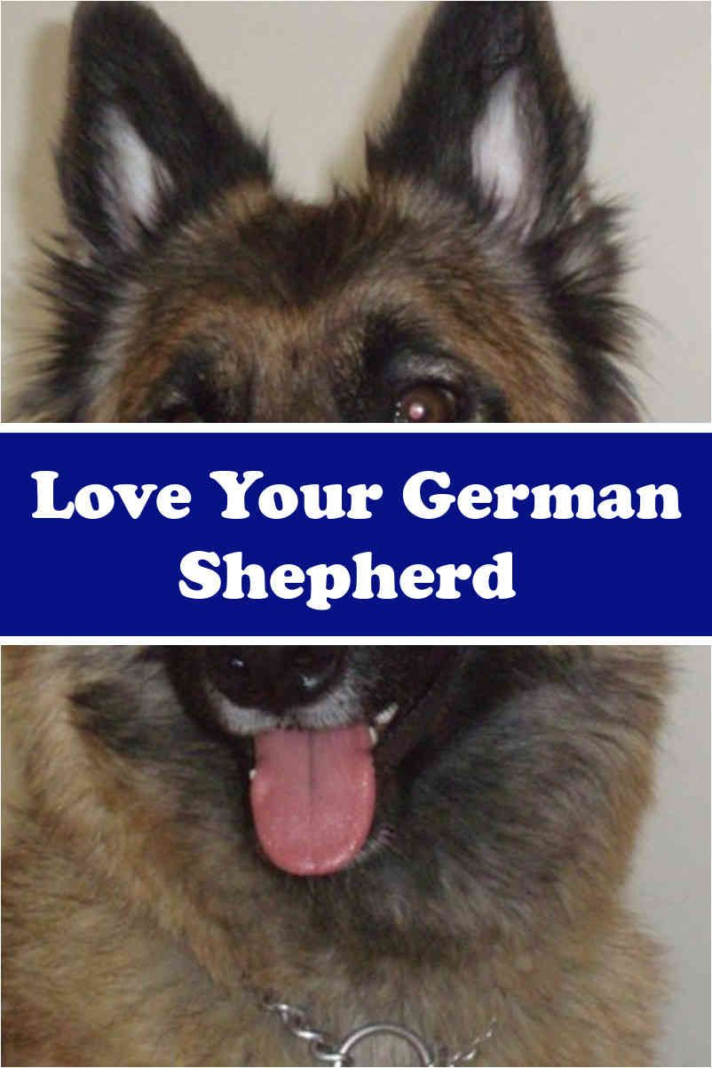 German Shepherd Pups Can Readily Capture The Affection Of Their