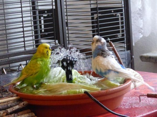 Wellensittich Spielzeug Selbst Bauen Papageienfreisitz Selber Bauen
