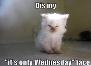 Funny Memes For Wednesday : Funny memes about wednesday wednesday memes