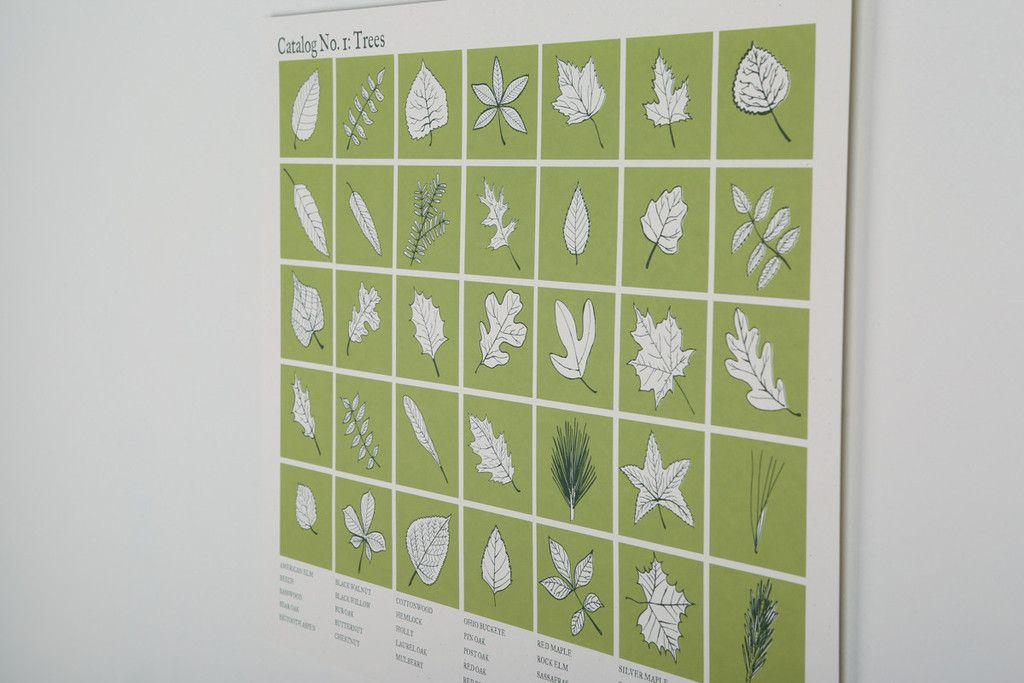 Catalog Trees