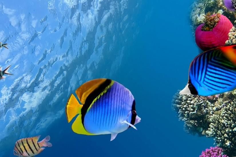 1920x1080 Wallpaper Under Water Coral Fish Sea Ocean Underwater Wallpaper Animal Wallpaper Ocean Wallpaper