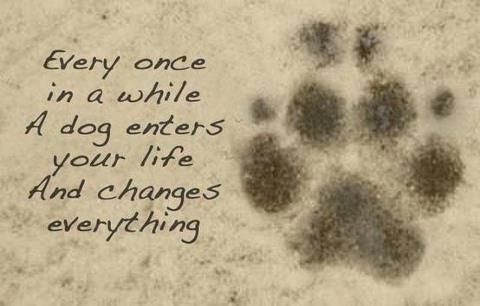Every once in a awhile a Dog enters your life and changes everything ... <3
