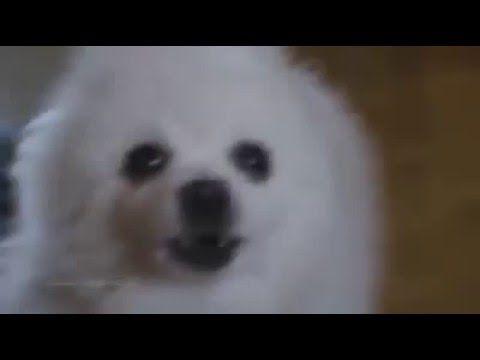 Linkin Bark Numb Credits To Insane Cherry Youtube Dog Cover Dogs Linkin Park