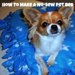 I am going to teach you how to make a no-sew pet bed for your furry companion using only fleece material, some polyester stuffing, a ruler, a...