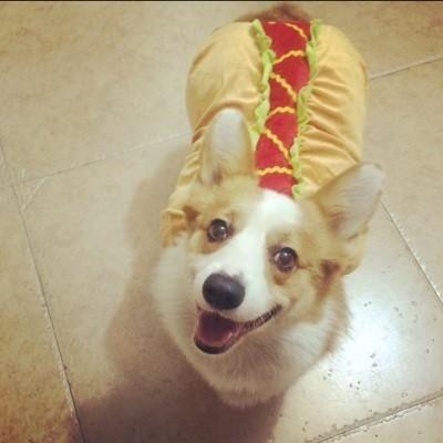Hamburger Dog Costume Products Pinterest Dogs Dog Costumes
