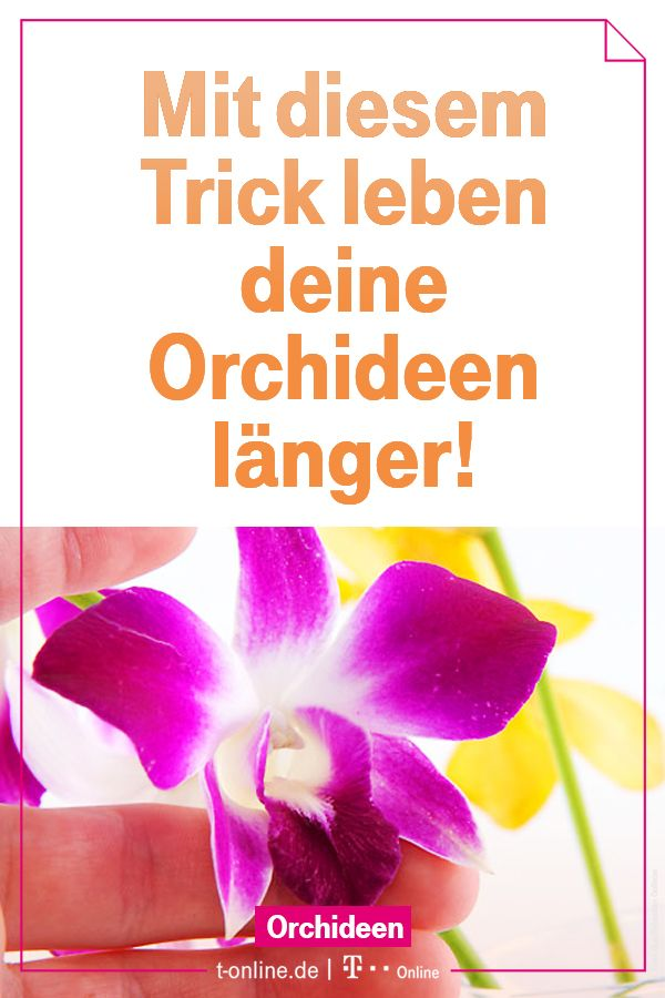 Photo of With this care, orchids live longer