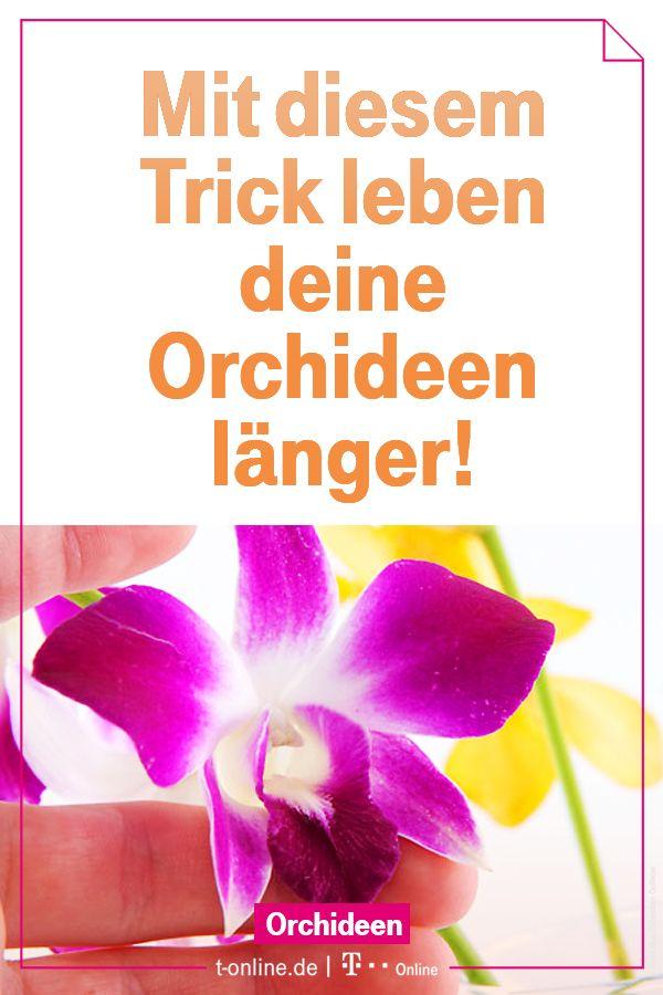 So erhältst du die Blütenpracht deiner Orchidee! #orchideen #pflege #zimmerpflanze #hortensienvermehren