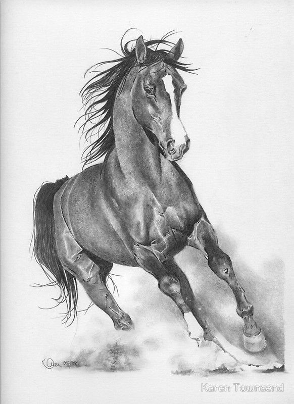 Pencil drawings of horses horse pencil drawings