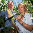 Monsanto will halt production of genetically modified corn in all of Europe, except Spain, Portugal and Czech republic. The agribusiness multinational states not to spend any more money on trials, development, marketing, court cases or anything else to get GM corn accepted in Europe.