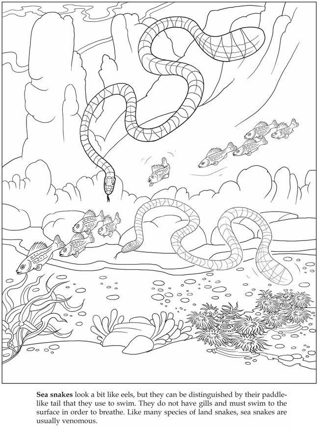 Let S Explore Sea Animals Sticker Coloring Book Dover Publications