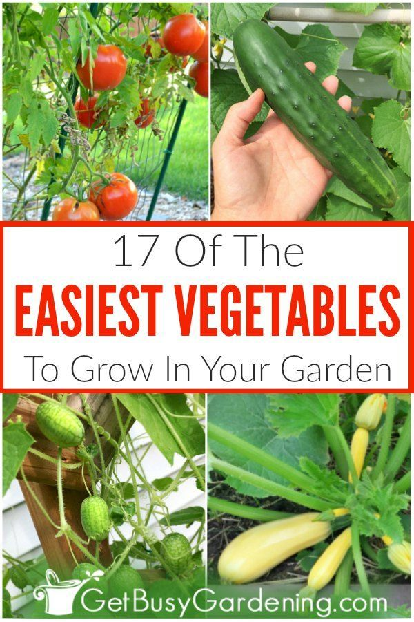 17 Easy Vegetables To Grow In Your Garden Easy Vegetables To