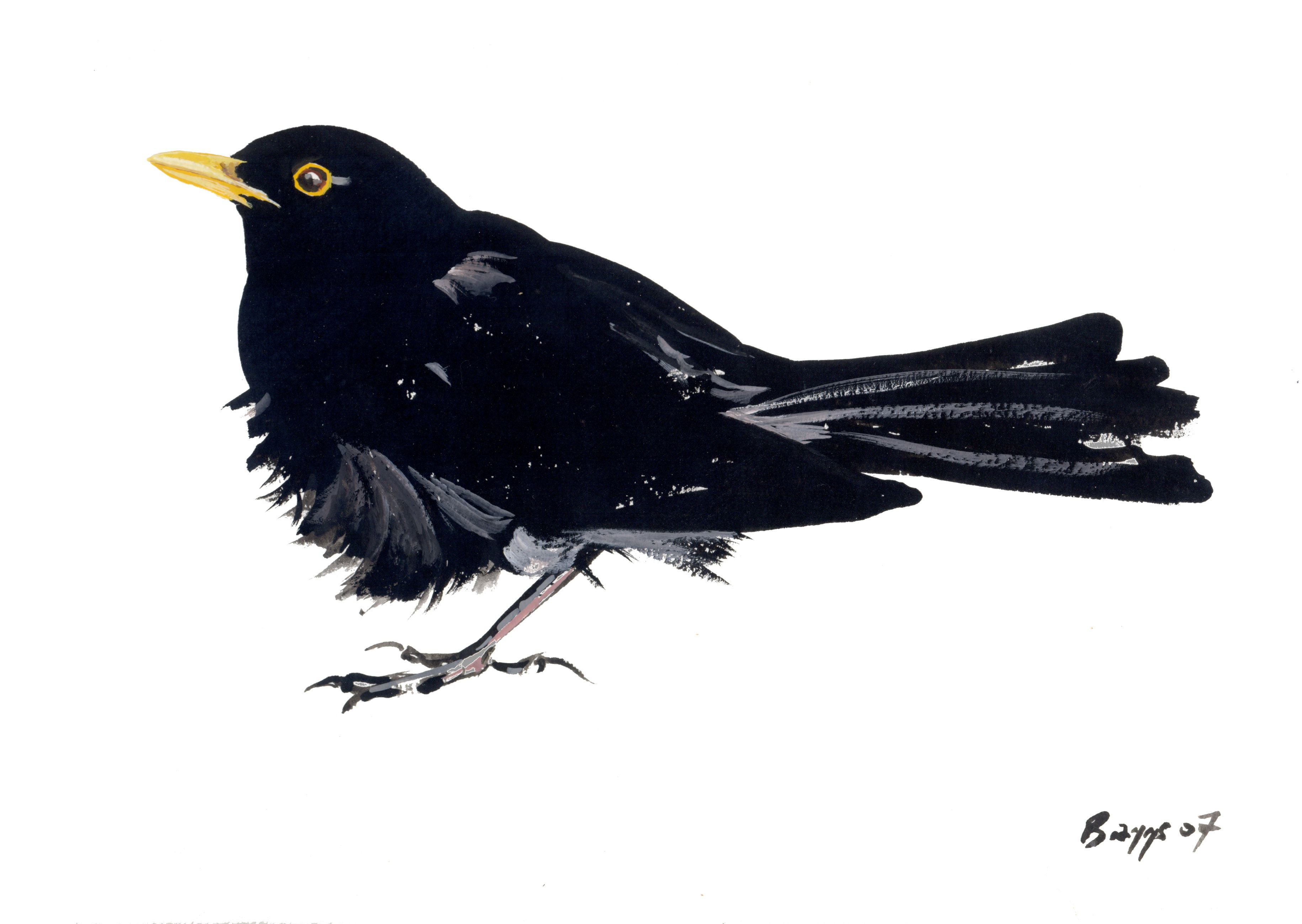 blackbirds drawing - photo #5