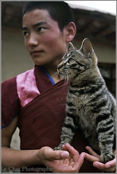 chat tigré et moine Tibétain | Les chats du tibet | Pinterest | Cat ...