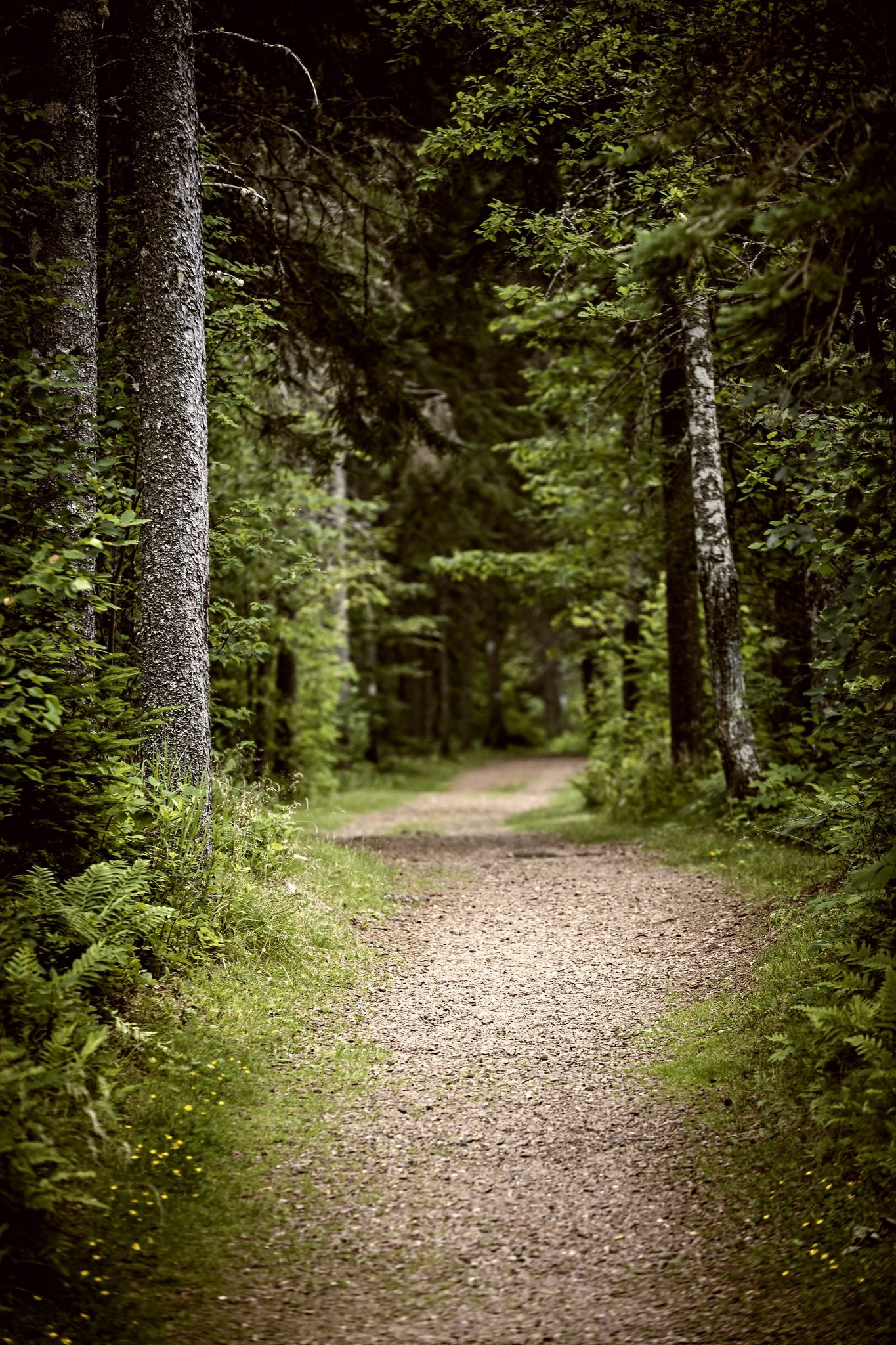 Path In Dark Moody Forest By Elena Elisseeva On 500px