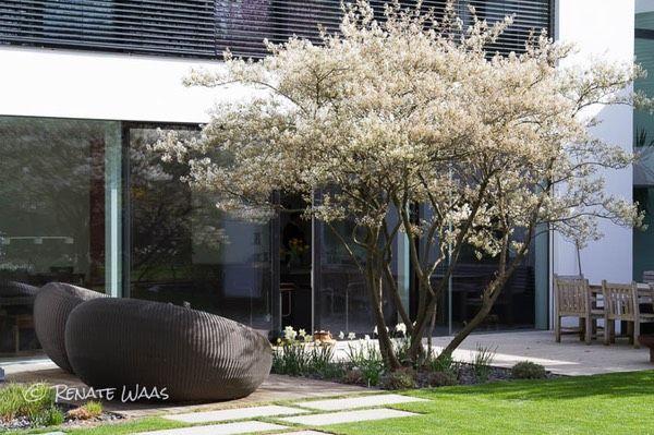 garten modern bepflanzen | lawcyber, Garten und Bauten