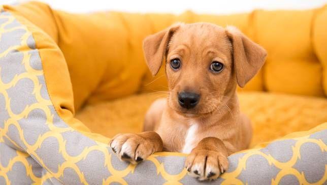 7 Things I Wish Someone Told Me Before I Adopted A Dog Dog Adoption Dog Leash Training Dog Memes