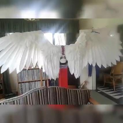 Photo of Halloween 3D Angel Devil Big Wings