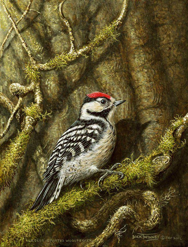 Lesser Spotted Woodpecker by Dick Twinney