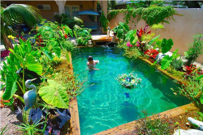 Natural swim ponds i love this jungle pond looking for Swimming pool koi pond conversion