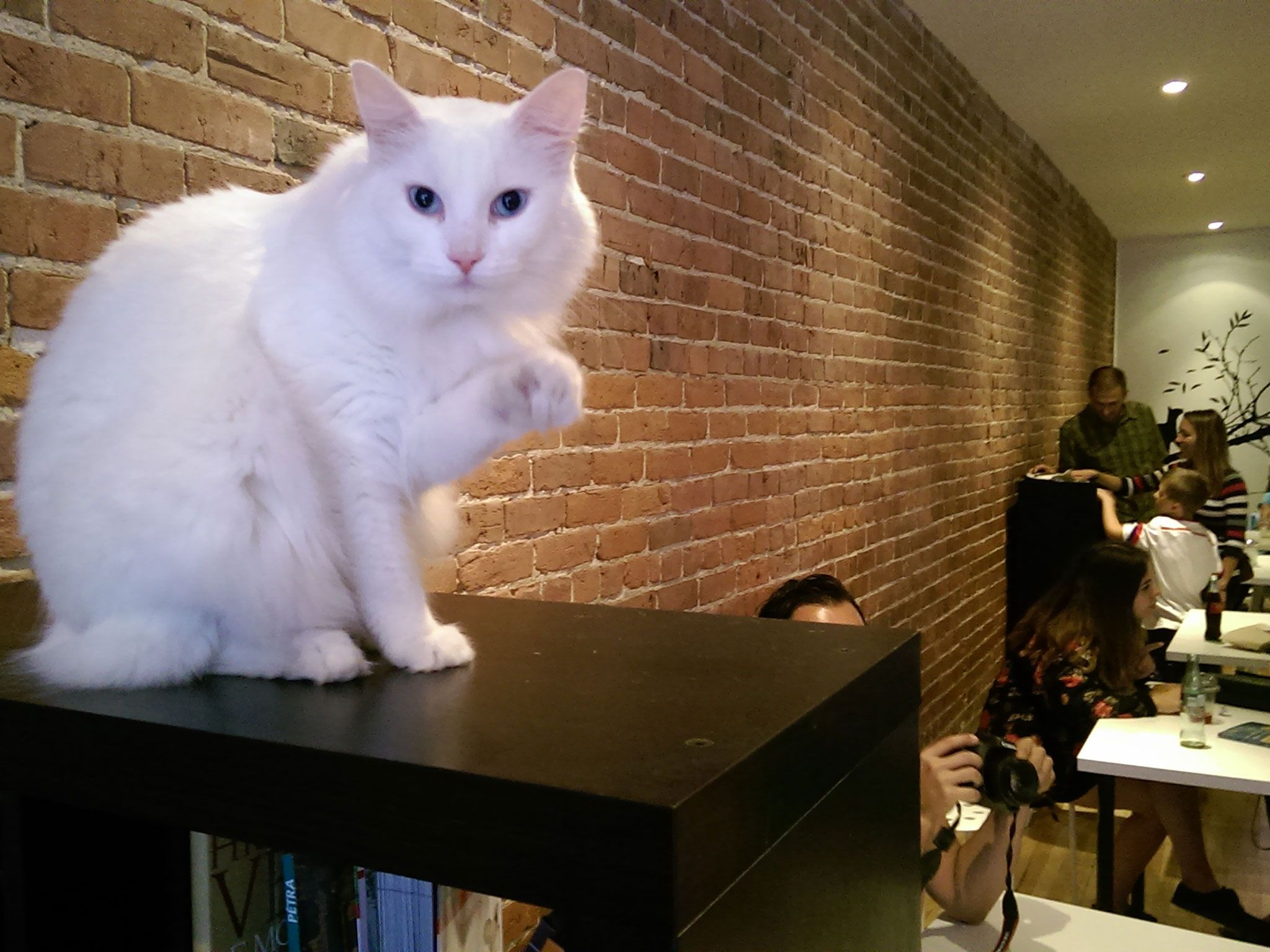 The 14 Best Cat Cafes Around The World Cat Cafe Cool Cats Cute