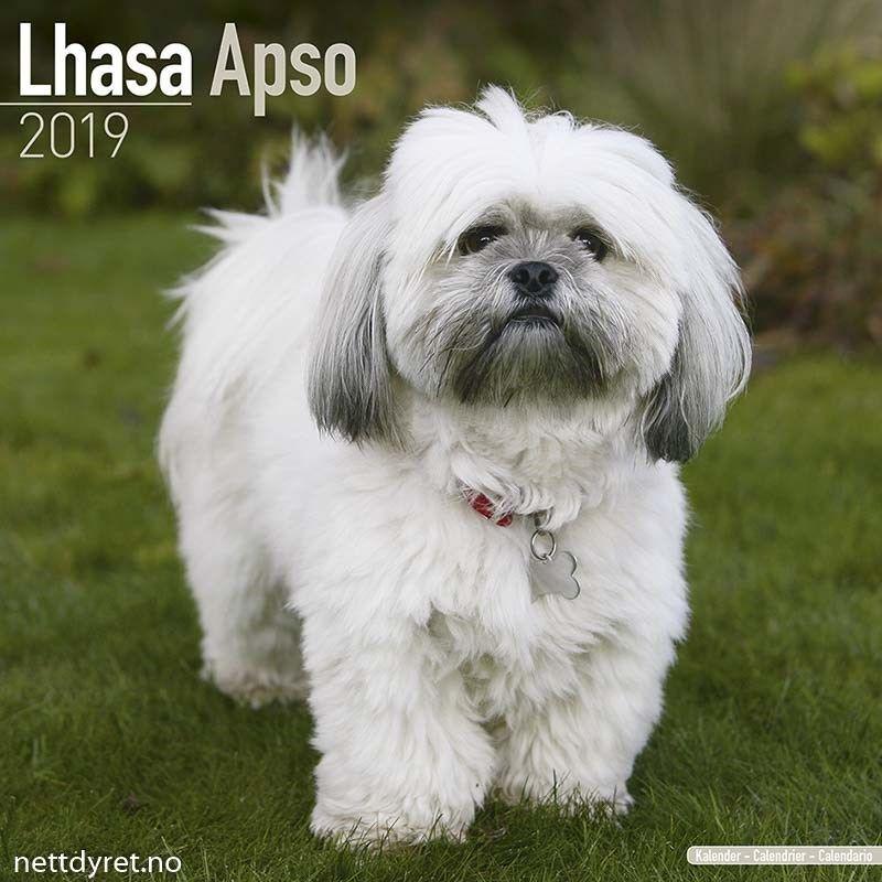 Dyrebutikk Dyreutstyr Nettdyret No Lhasa Apso 2019 Kalender 2019 Kalendere Hund Kjaeledyr Hunderaser Sote Hunder
