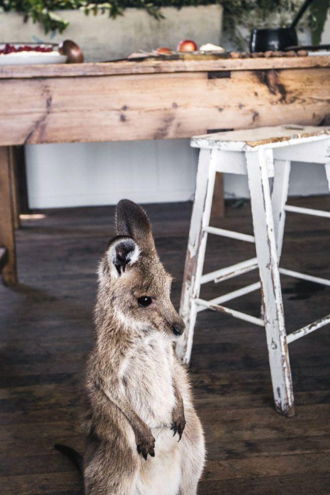 Honey Baby Kangaroo Photo Kara Rosenlund Animaux Lion De Mer Bebe Lions